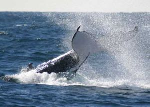 Whale Watching Sydney - Kingaroy Accommodation
