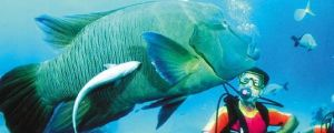 Aristocat Snorkel and Scuba Port Douglas - Kingaroy Accommodation